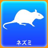 ネズミ茶.png
